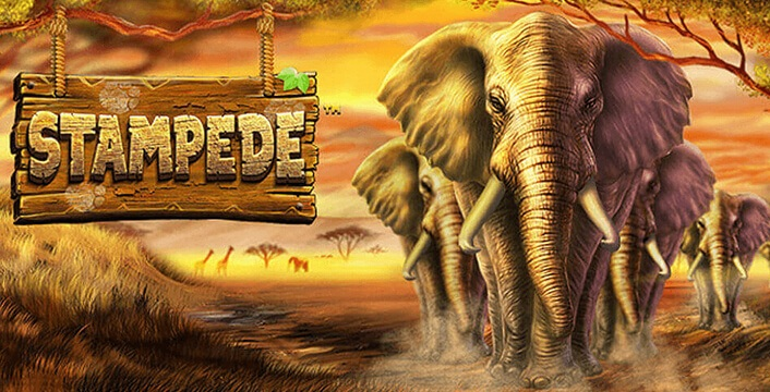 Run Wild with Stampede and Free Spins this Month!